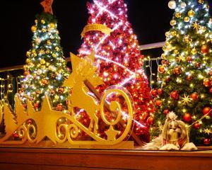 クリスマスには世界を終わらせろ――聖夜に読みたいセカイノオワリ本10冊