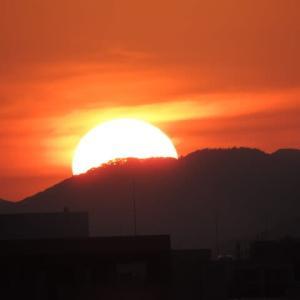 大きな太陽と野鳥