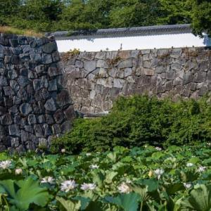 7月11日の福岡市舞鶴公園お濠