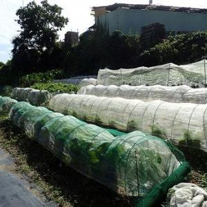畑の台風対策(台風19号編)☆葉山野菜栽培記(10月上旬)