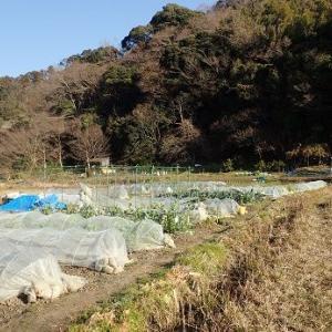 ご注文出荷野菜☆葉山農園(1月下旬)