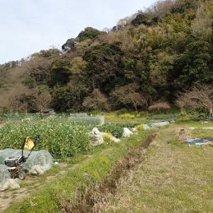 排水作業と耕運機☆葉山農園(3月下旬)