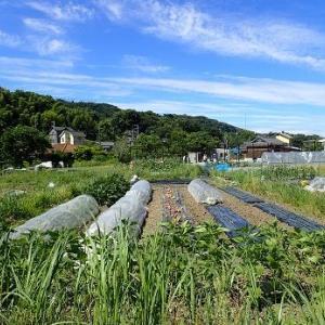 空芯菜&トウモロコシ種まき☆葉山農園(6月中旬)