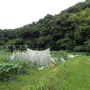水浸し☆葉山農園(7月上旬)