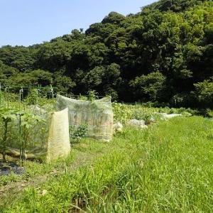 草刈り機の刃交換とグリス注入☆葉山農園(8月初旬)