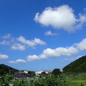 耕運機☆葉山農園(8月初旬)