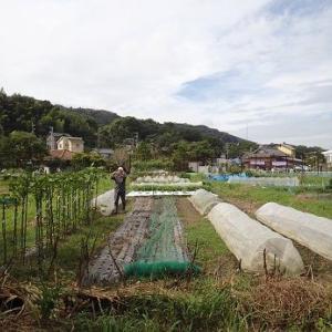 耕運機をかけてもらお~☆葉山農園(9月下旬)