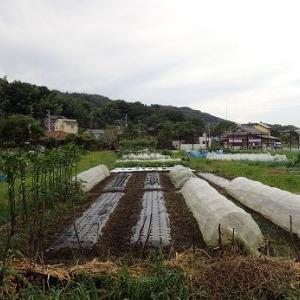 葉物野菜の種まき☆葉山農園(10月初旬)