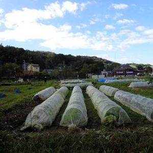 長ネギ&耕運機☆葉山農園(10月下旬)