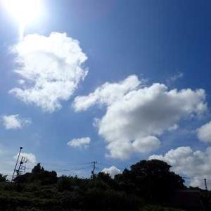 冬至カボチャの敷き藁☆葉山農園(9月上旬)