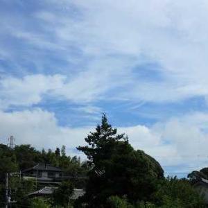 秋ズッキーニ収穫&ニンニク発芽☆葉山農園(9月中旬)