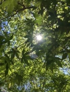 木漏れ日と蝉と茸