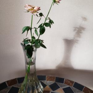切り花の楽しみ方