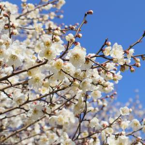 【もうすぐ春を感じる梅林公園へ行ってきました】