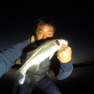 夕方の釣り シーバス33cm