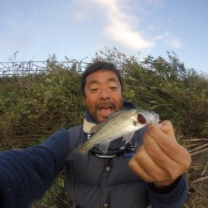 夕方の釣り シーバス15cm