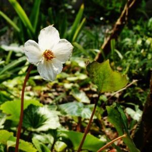 庭の小さな花たち