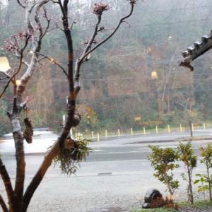 雨の週末☆