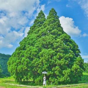 天の声(416=1年+51)AI元年(13)日本国の再生(390)光(383)令和二年(13)