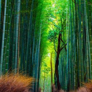 天の声(390=1年+27) 日本国の再生(365) 光(358) 現役寿命(125)