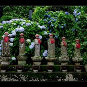 六地蔵と紫陽花