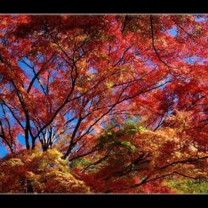 ゆうすげ元湯の紅葉