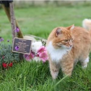 自ら葬儀場に出向き、遺族の悲しみを感じ取り、心を癒してくれる特別な能力のある猫(イギリス)