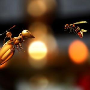 ミツバチの世界でも「アメとムチ」は有効。罰を与えられたハチはやる気を出すことが判明(フランス研究)