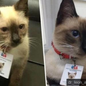 嵐の日にやってきた野良猫を保護し「猫弁護士」として雇用した弁護士協会(ブラジル)