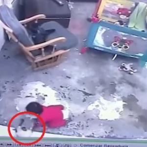危機一髪!猫が赤ちゃんを転落事故から救う、背中に飛びつき前脚でブロック(コロンビア)