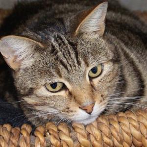 愛猫を飛行機の貨物室に預けたくない。替え玉作戦でまんまと機内客室に持ち込んだ飼い主だが、後にバレる(ロシア)