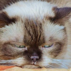 猫が痛みを感じているときの表情を見分けるコツが判明(英研究)