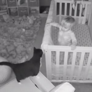 猫と赤子の密会現場が監視カメラにとらえられる。ピロートークを繰り広げていた模様(アメリカ)
