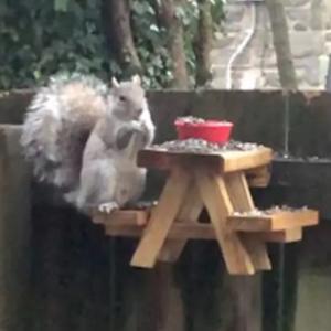 自己待機中の男性、庭にやってくる常連のリスにピクニックテーブルを作ってみた(アメリカ)