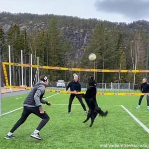 ちゃんとトスあげてるやん!犬と一緒にバレーボールがプレイできるってすごい!