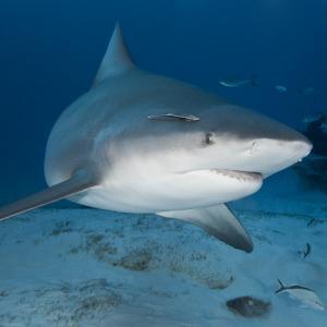 サメはダイバーから大切なものを盗んでいきました。足ひれを噛みとられる(オーストラリア)