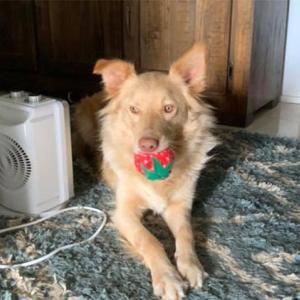 犬のお気に入りのおもちゃが製造中止に。SNSでつぶやいたところ嬉しいサプライズ!(オーストラリア)
