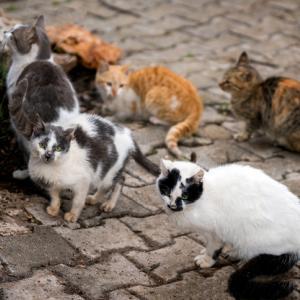 妻の猫に対する執着がすごすぎて離婚した夫婦の事例(シンガポール)