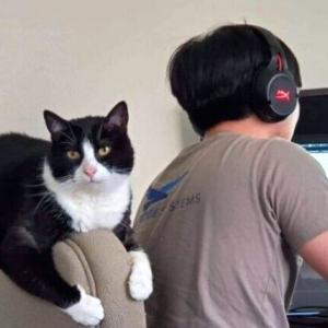 自宅にいるのボスの方がやっかいかも?テレワーク中最強の監督官と化したペットたち