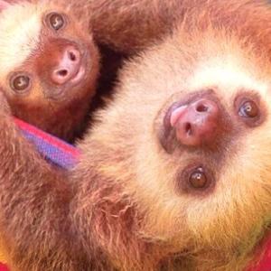 家族の「きずな」を大切にしたい!優しく抱き合う動物ファミリーの写真集