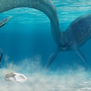 南極で発見された謎の化石の正体がついに判明、巨大な卵であることが判明。