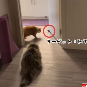 靴下を敵認定した猫、果敢に攻めるも戦略的撤退