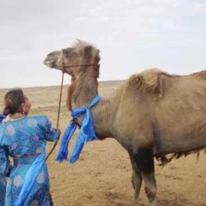 元の飼い主が忘れられず砂漠を100キロ歩いて戻ったラクダ(中国内モンゴル自治区)