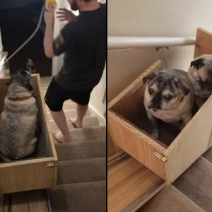 年老いた3匹の愛犬のため、自作で階段昇降リフトを作った女性