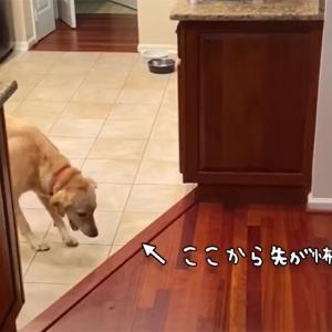 怖い怖い床が怖い。前に進めない犬の取った行動は?