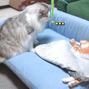 「この子猫が心配ニャ、早く元気になるといいニャ」病気のちび猫を優しく見守る犬と猫