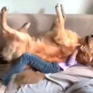 犬氏「信頼してるから大丈夫!」ゴールデンと少女のトラストフォール