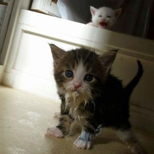 お口のまわりに食べ物がついてる猫のかわいさとクリーチャー感を存分に味わうの会