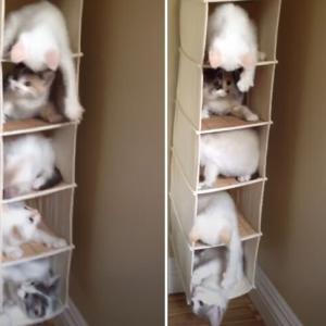 子猫のタワマン、どの階に住むかで大混乱