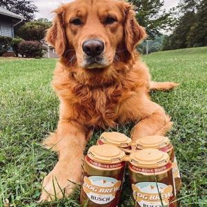 ノンアルコールの犬用ビール缶を新発売したところ即完売、大ヒット商品に(アメリカ)